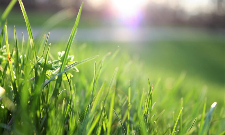 Photo of Post-Winter Lawn Care: 10 Tasks to Accomplish in Spring and Summer
